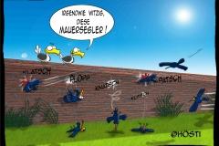HVK Mauersegler