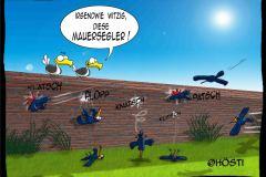 HVK-Mauersegler