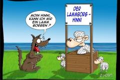VS Lammborg Hinni abg