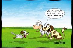 VS Wollmops abg