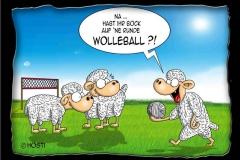 wolleball